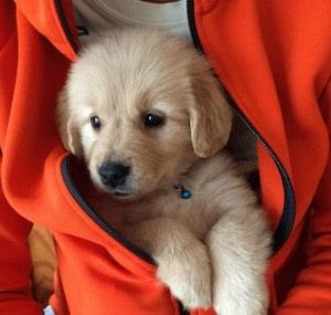 【子犬を飼いたい!】ペットショップ、ブリーダー、どちらで選ぶべき?