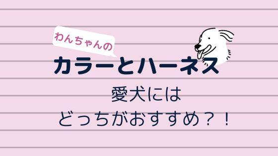 首輪(カラー)とハーネス〜愛犬にはどっちがおすすめ?!