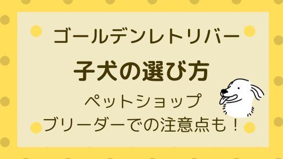 子犬【ゴールデンレトリバー】の選び方