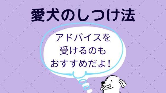 しつけ方法【愛犬】についてアドバイスを受けてみるのもおすすめ!
