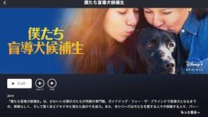僕たち盲導犬候補生【ディズニープラス】オリジナル作品を観る方法は?